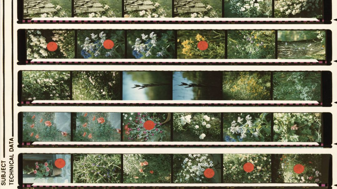 Rows of photographic colour slide negatives sowing flowers and stone walls