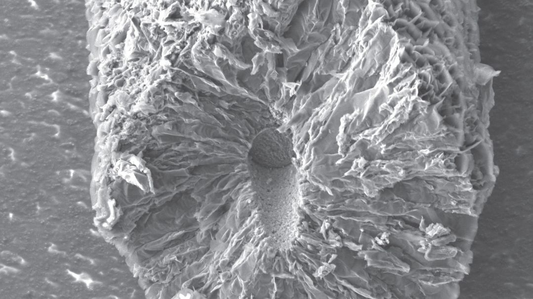 cross-section of a coated carbon-fibre electrode