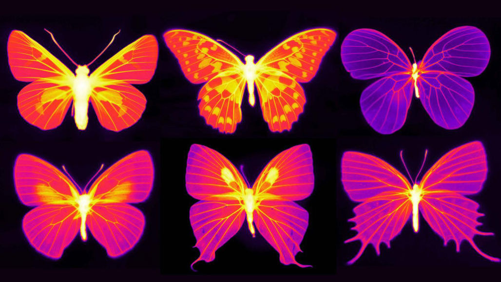 Infrared images of butterfly wings in reds, purples, yellows and oranges.