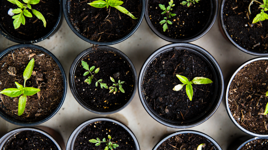 image of small plants in pots